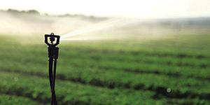 Agricultura de regadio já fala a uma só voz na Europa